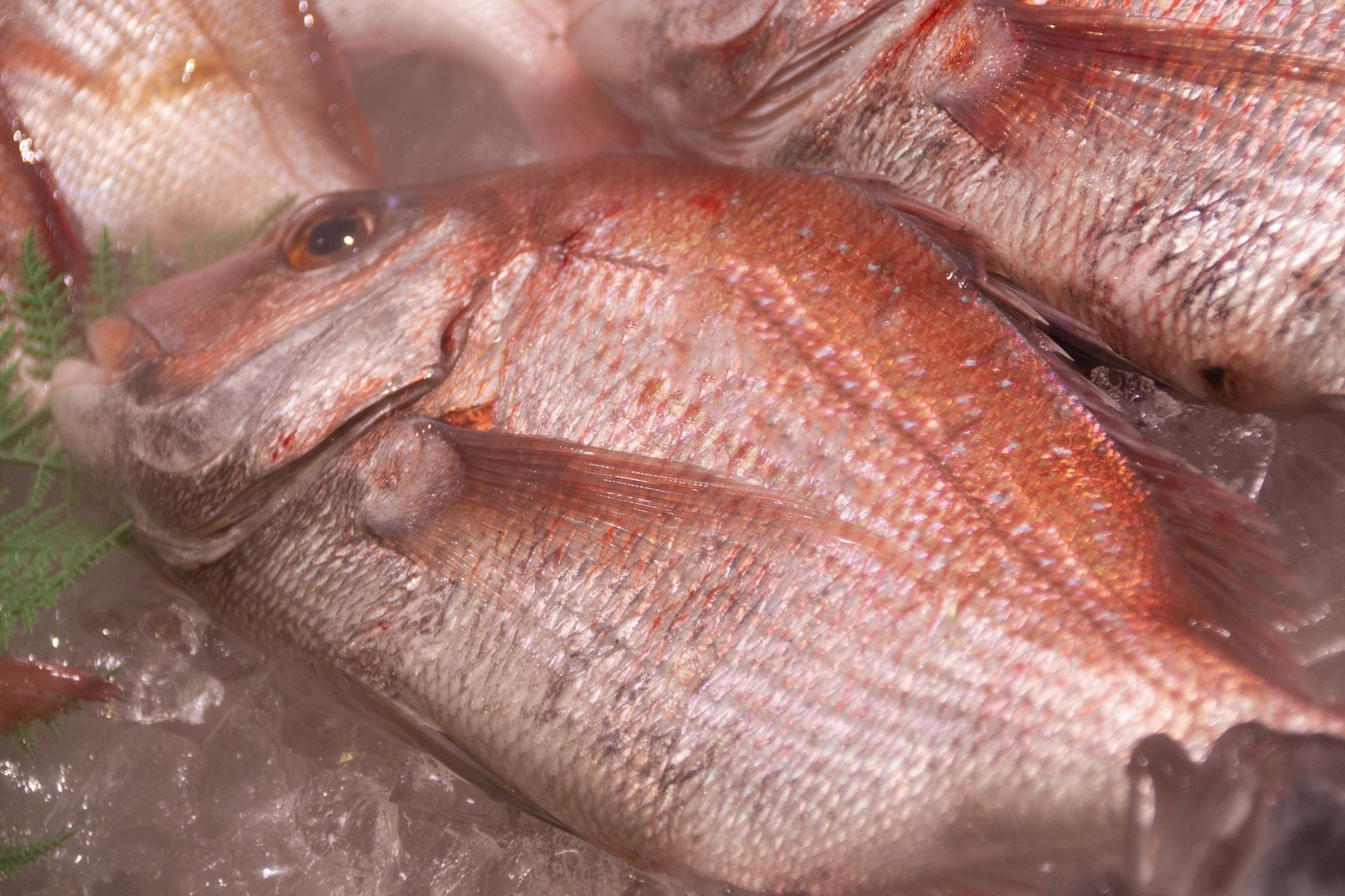 鯛めし、鯛茶漬けが美味!鯛のダイエットとアンチエイジング効果、鯛の種類も解説
