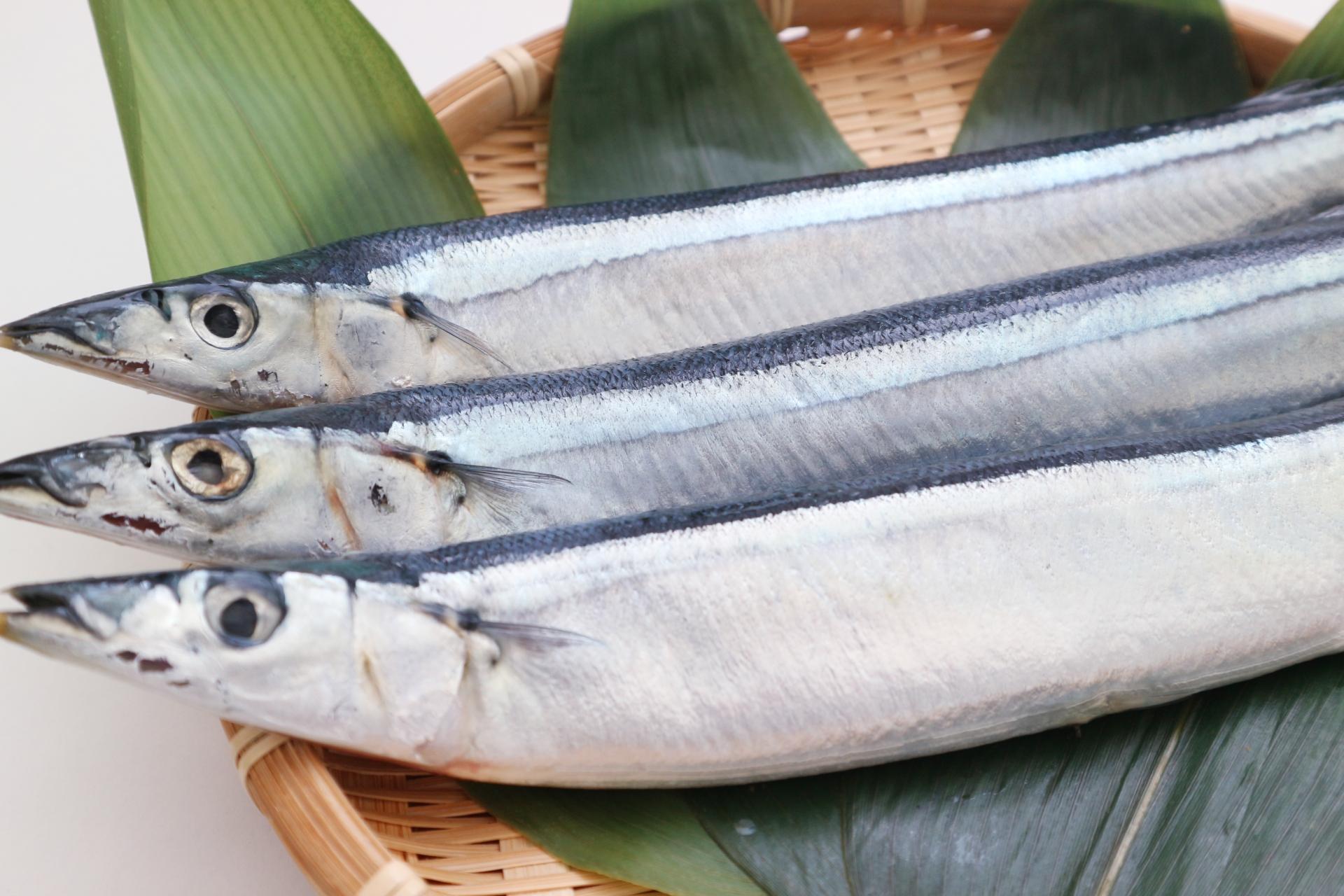 秋刀魚で脳の活性化と生活習慣病予防と美容習慣!栄養と大根おろしの関係も解説
