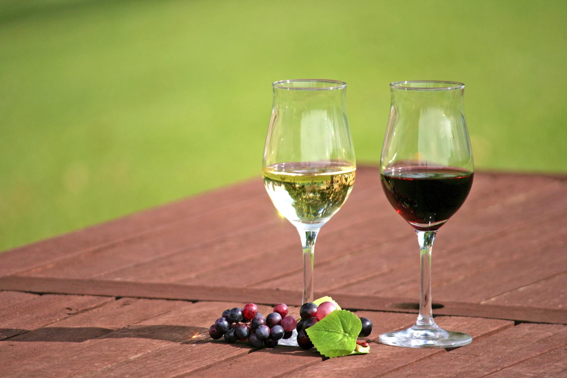 オーガニックワインと無添加・ビオの違い【おすすめワイン・シャンパンも紹介】